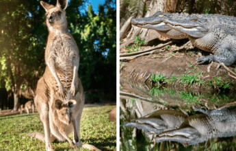 visiting Australia Zoo with kids